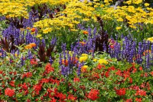 Organic Gardening Information https://san-antonio-landscaper.com